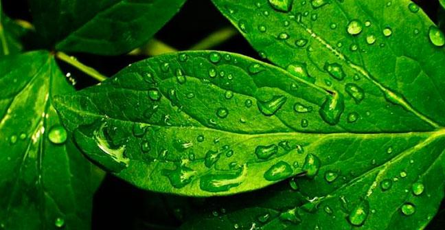 Fertilización Foliar. Otra exitosa forma de nutrir a las plantas